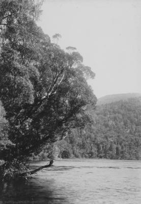 Lake Forster, Southland