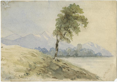 Study (tree overlooking a lake)