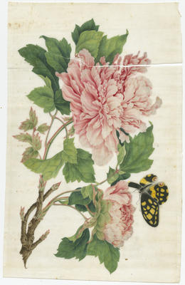 Untitled - pink peonies and butterfly
