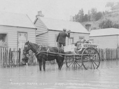 Flood, Napier