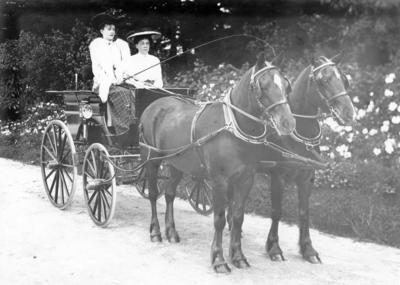 Horses and Buggy, Maraekakaho Station; Sorrell, Charles Hudson Cunningham