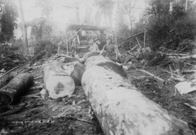 Manson and Company Sawmillers, Tikokino