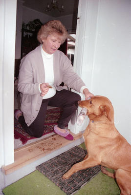June Wilson of Pakowhai rewards Honey with a biscuit