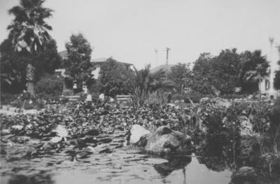 Pond, Clive Square, Napier; Newport, Rex Frederick