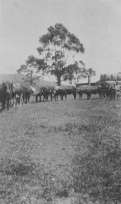 Alfred Ocean Lambert and Bullock Team