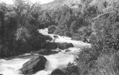 Stream, Waikaremoana