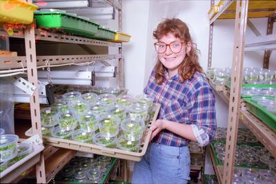 Kim Peterson, Plant Propagation Laboratories, Havelock North