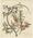 Dracophyllum squarrosum and Clematis indivisa