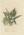 Hymenophyllum demissum, Polypodium serpens, Asplenium falcatum, Polypodium pustulatum, Aspidium hispidum, Asplenium obtusatum